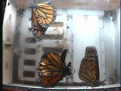 Monarch1-Flt_Whole 2009-12-06_19-52-04