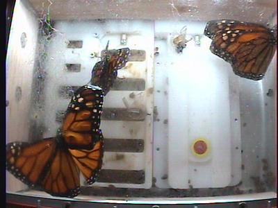 Monarch1-Flt_Whole 2009-12-06_05-18-45