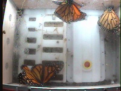 Monarch1-Flt_Whole 2009-12-07_05-08-59
