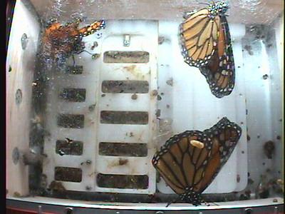 Monarch1-Flt_Whole 2009-12-05_05-07-43