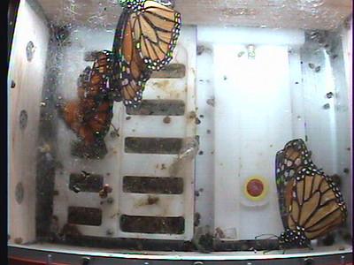 Monarch1-Flt_Whole 2009-12-05_04-57-25