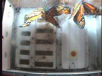 Monarch1-Flt_Whole 2009-12-06_03-45-57