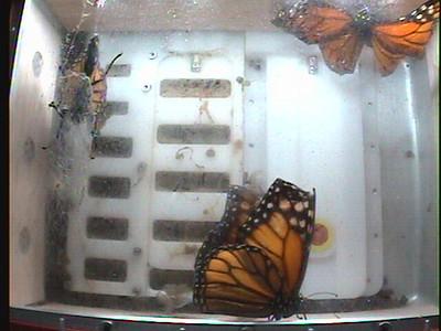 Monarch1-Flt_Whole 2009-12-08_06-31-16