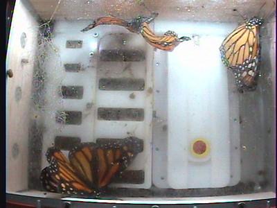 Monarch1-Flt_Whole 2009-12-07_06-00-32