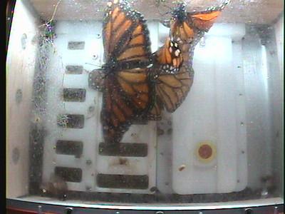Monarch1-Flt_Whole 2009-12-07_21-25-00