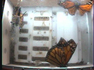 Monarch1-Flt_Whole 2009-12-08_06-51-53