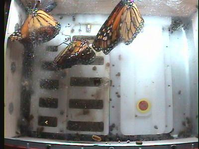 Monarch1-Flt_Whole 2009-12-05_22-57-20