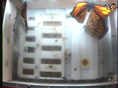 Monarch1-Flt_Whole 2009-12-07_23-38-59
