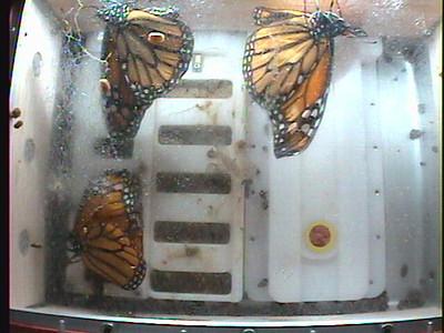 Monarch1-Flt_Whole 2009-12-06_21-35-17
