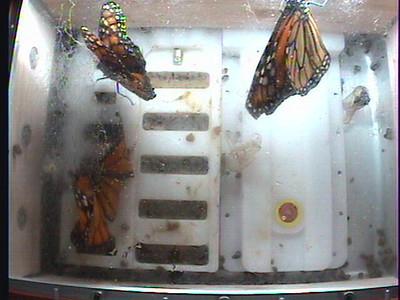 Monarch1-Flt_Whole 2009-12-06_06-41-12
