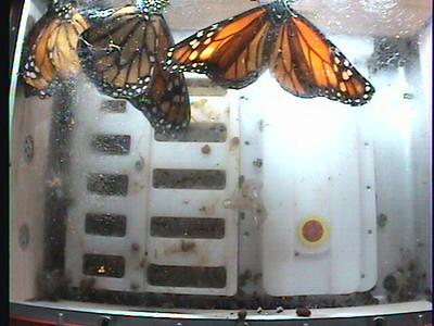 Monarch1-Flt_Whole 2009-12-05_22-36-45