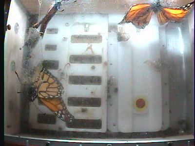 Monarch1-Flt_Whole 2009-12-08_01-11-45