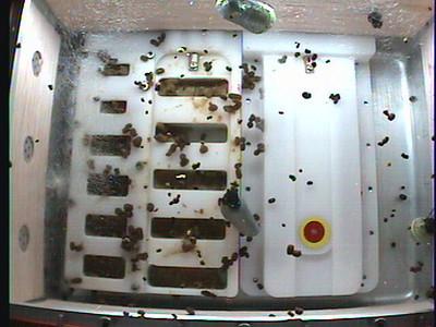 Monarch1-Flt_Whole 2009-12-03_05-27-19