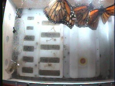 Monarch1-Flt_Whole 2009-12-08_03-46-21
