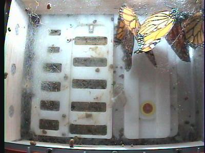 Monarch1-Flt_Whole 2009-12-06_01-21-41