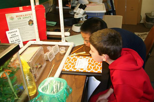 Two students studying the caterpillars- Roosevelt Public School, Roosevelt, NJ 12/1/09