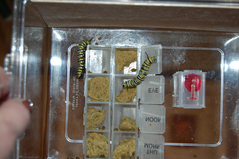 Monarchs in Space Project 186