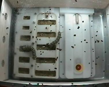 ISS-monarchs-20091120