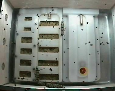 ISS-monarchs-20091119