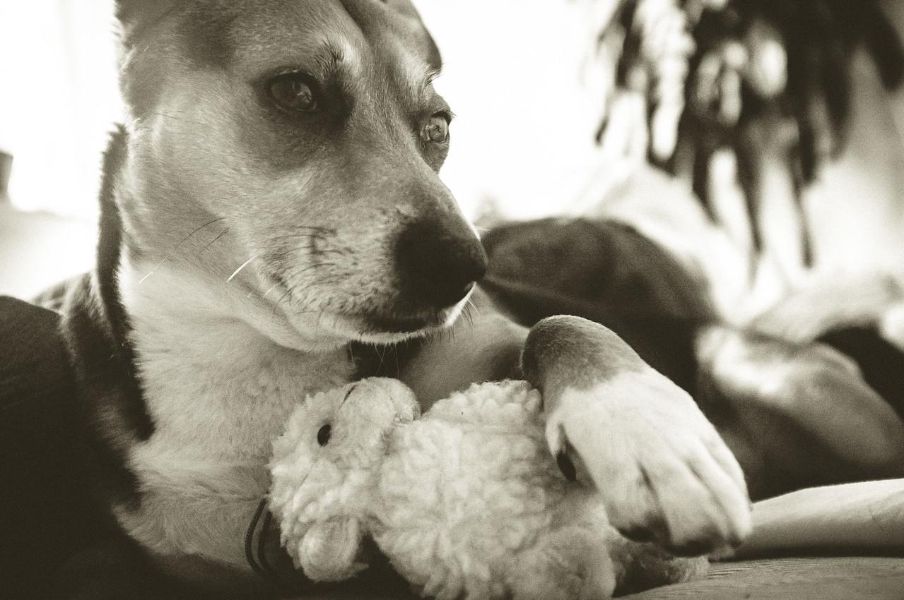 ah chocciaż dali mi ulubiobą owce weeda... zawsze coś!