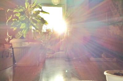 Nasłonecznianie podopiecznych