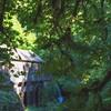 Cedar Creek Grist Mill Monet Trees and Shadows