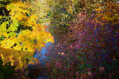 Issaquah Creek fall colors Monet Impression 10-31-17