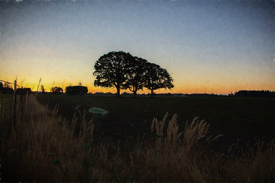 3 Oaks Golden sunrise Monet Impression - near McMinnville, OR