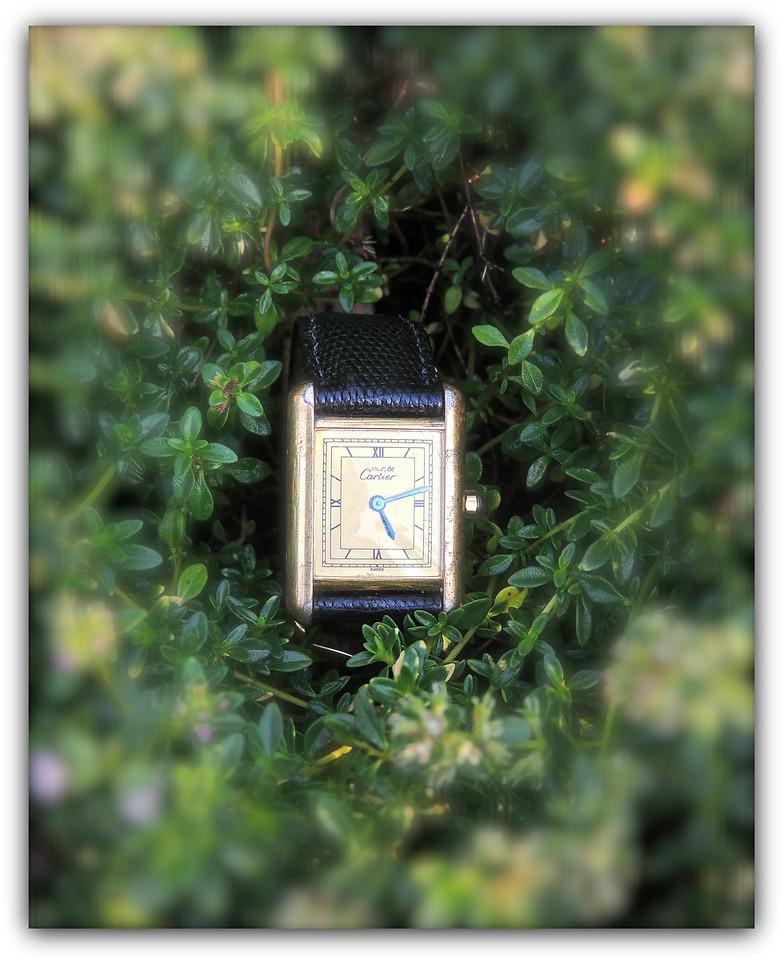 Time & Thyme Again