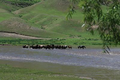 Mongolia2008_-126