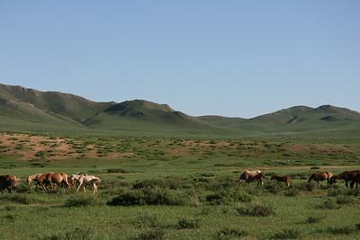 Mongolia2008_-42