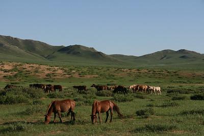 Mongolia2008_-40