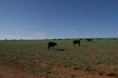 Mongolia2008_-67