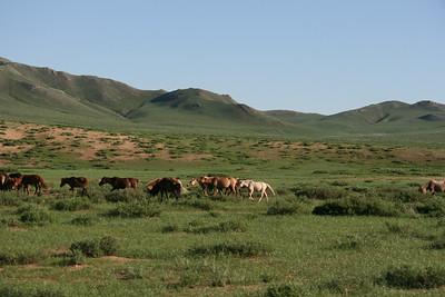 Mongolia2008_-41