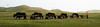 Yak caravan in the grasslands between Tariat and Tsetserleg