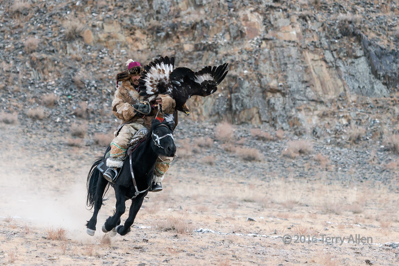 """Whoops #1 (best larger)<br /> <br /> Eagle Festival, Olgii, Western Mongolia<br /> <br /> Slight mishap with the eagle.  Not all the competitors had an easy time luring their eagles.  This eagle overshot....check out the look in the horse's eye.<br /> <br /> Another mishap can be seen here: <a href=""""http://goo.gl/ZKqRr3"""">http://goo.gl/ZKqRr3</a><br /> <br /> 24/07/15  <a href=""""http://www.allenfotowild.com"""">http://www.allenfotowild.com</a>"""
