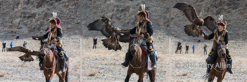 """Luring the eagle to owner's glove (best larger)<br /> <br /> The next competition at the Eagle Festival was one of the most exciting from the point of view of the action and the challenges to the photographer.  <br /> <br /> The eagle hunter's golden eagle is taken to the top of a hill behind the competition field and the eagle hunter waits below on his horse, holding a rabbit leg or a piece of fox meat.  When the eagle's hood is removed and it is released, the hunter calls the eagle to him by waving the meat in the air and galloping his horse across the field. The time taken from release to the eagle landing on the hunter's glove is recorded and the winner is the one with the fastest time.<br /> <br /> Things do not always go according to plan.  Sometimes the eagle misses the bait and has to try again, sometimes it lands on the ground and just sits there, and occasionally it just flies away to do its own thing.  The photographic challenge is to anticipate when and where the eagle will get close enough to the hunter to catch the moments of capture, which can take place anywhere in a large field.<br /> <br /> This photo is a 3 shot collage of a successful capture... by the eagle and the eagle hunter (...and the photographer). Each of the 3 individual shots can be seen here, along with a couple more shots of the best eagle, costume and horse competition (the eagle is hooded in this competition, and unhooded in the 'return to owner' competition): <a href=""""http://goo.gl/RMcXuQ"""">http://goo.gl/RMcXuQ</a><br /> <br /> 07/07/15  <a href=""""http://www.allenfotowild.com"""">http://www.allenfotowild.com</a>"""