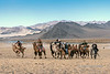 The rest of the pack<br /> <br /> Camel race, Eagle Festival, Olgii, Western Mongolia