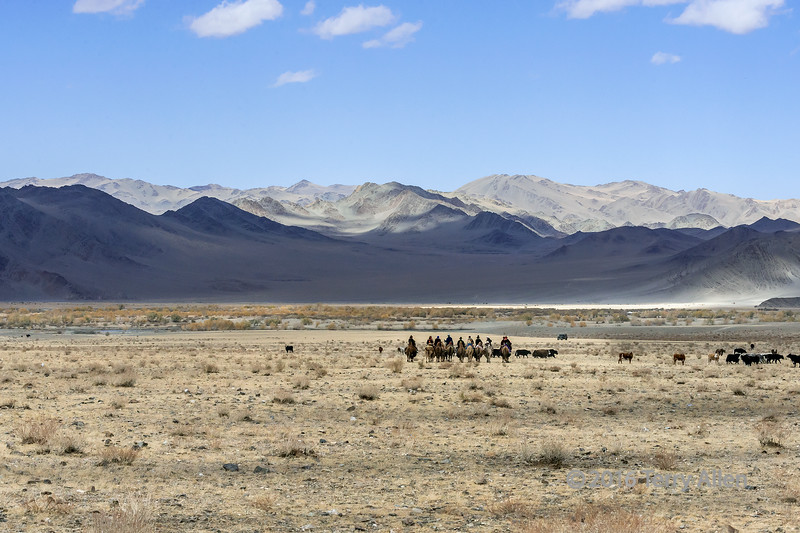 The start of the race<br /> <br /> Bactrian camel riders in the Hovd River valley at the start of the camel race, Eagle Festival, Olgii, Western Mongolia.  You can see the distortion in the air, caused by the heat and the distance at larger sizes