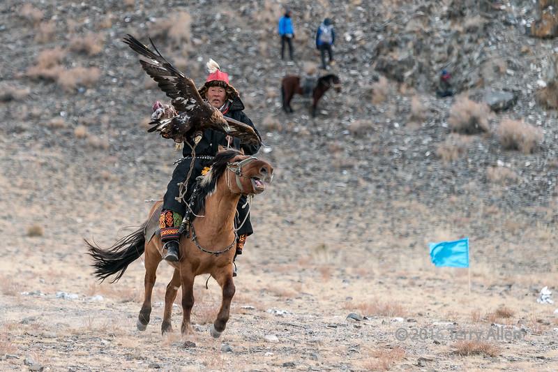 Eagle misses the lure, Eagle Festival, Olgii, Western Mongolia