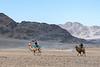 Camel race between the two leader, blond vs brunette Bactrian camel, Eagle Festival, Olgii, Western Mongolia