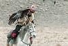 Golden eagle feeding on the lure, Eagle Festival, Olgii, Western Mongolia