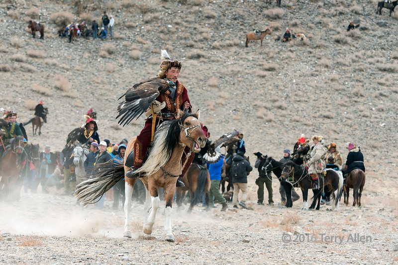 Gorgeous horse with two tone tail and mane, Eagle Festival, Olgii, Western Mongolia