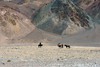 Pair of Kazakh eagle hunters retreiving an escaped Bactrian camel to take to the Eagle Festival, Olgii, Western Mongolia