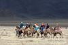 Camel racers heading to the start line, Eagle Festival, Olgii, Western Mongolia