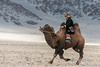 Chasing down the leader, camel race at the Eagle Festival, Olgii, Western Mongolia