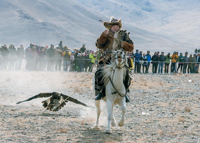 Kazakh eagle hunter luring his golden eagle, Shyrga Tartu compeition to lure the eagle #3, Eagle Festival, Olgii, Western Mongolia