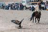 Kazakh eagle hunter luring his egle near the judge's stand, Eagle Festival, Olgii, Western Mongolia