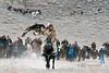 Competitor 4, black horse (best larger)<br /> <br /> Eagle Festival, Olgii, Western Mongolia