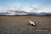 Sunrise with yak skull and distant ger camps on the steppes, near Khovd, Western Mongolia<br /> <br /> I position the camera to try to show that the central cloud had a parallel shape to the yak skull